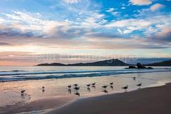 bombas-0073 (iedafunari) Tags: santa praia brasil mar barco gaivotas catarina amanhecer bombas canoa bombinhas