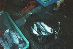 () Tags: film adox colorimplosion 100 minolta himatic af nanfangao  fish market basket harbor