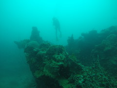 This was actually my first wreck dive and it was really exciting!