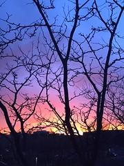 88 (webmastermama71) Tags: trees sunset sky sun clouds sunrise evening dusk silhouettes sunsets sunny sunsetting sunshots sunsetphotography silhouettephotography