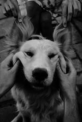 Shiva Shiva (Sofw) Tags: dog smile shiva