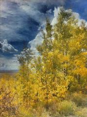 Golden aspens framed by a cloudy blue sky... Colorado! (victoriaporter *) Tags: trees iris season flora colorado location aspen iphone 2011 autopainter bracketmode prohdr toryporter