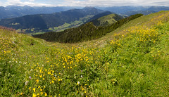 Carinthian Mountains (Walter Quirtmair) Tags: flowers trees summer sky panorama mountains alps green grass yellow clouds forest austria spring meadow carinthia dandelion alpine valley gailtal