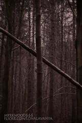 Naudiz  (Myrkwood666) Tags: symbol pagan rune nyd futhark asatru naudr seelenwinter mrkskygge naudiz myrkwood666