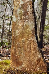 Aden Carver's Self Carved Tombstone (esywlkr) Tags: cemetery grave stone see back nc ranger remember walk some northcarolina ground it went if ago years visiting sits recently wnc greatsmokymountainsnationalpark gsmnp westernnorthcarolina remained i sturdily tompstone adencarver