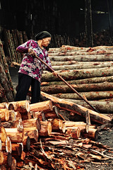 Kuala Sepetang (Charcoal Factory) 8/10 (Vernon Lee) Tags: canal factory mangrove charcoal swamp worker taiping rosewood perak slicing kualasepetang