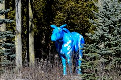 Once in a blue moose... (Lynn McFulton) Tags: blue canada moose molson 3652012 2010yip