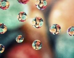 10th Feb 2012: sweet (birbee) Tags: macro drops experimental refraction sweets droplet blinkagain bestofblinkwinners