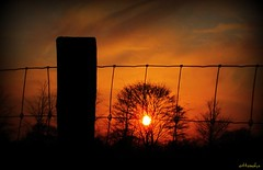 Through the fence (ottosohn) Tags: sunset red sky rot fence germany landscape sonnenuntergang himmel zaun wiremesh moers wirenetting maschendrahtzaun zaunpfahl kapellen maschendraht holderberg trynka schwafheimermeer ottosohn mygearandme mygearandmepremium mygearandmebronze mygearandmesilver mygearandmegold mygearandmeplatinum