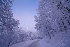 D, neve (Maurizio M.) Tags: road park sunset moon white snow cold ice colors alberi woods strada branch luna m cielo neve alta february bianco freddo viterbo rami maurizio bosco ghiaccio febbraio mercuri tuscia innevata innevati faggeta nevone