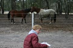 Reflection (Barbara Alexander) Tags: horses boundaries selfimprovement selfawareness mentorship barbaraalexander equineexperientiallearning eponaridge