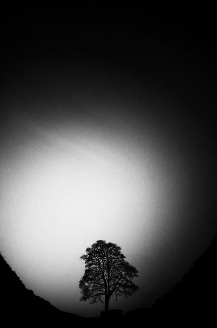 Wee Tree II
