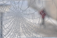 Captured in a winter's web... (Julka2009...(mostly off)) Tags: winter light red snow man blur cold colour texture netherlands composition walking droplets nikon pattern image bokeh expression web captured thenetherlands figure february capture shape spidersweb brabant 2012 ourtime northbrabant d90 contemporaryartsociety abigfave trolled nikond90 calendaryourcreation crazygeniuses ☼♥givemefive♥☼ artcityart
