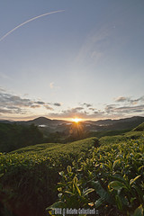 SUNRISE WITH MOON (HeSoMe CollectionS) Tags: sunrise sony alpha slt boh a77 teaestate cameronhighland sgpalas hesome
