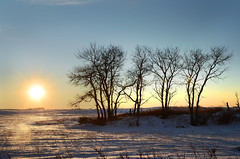 prairie sentinels (Harry2010) Tags: winter sunset sun canada tree bluesky saskatchewan prairies