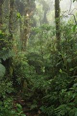 Parque Nacional Montecristo cloud forest (tik_tok) Tags: travel camping latinamerica nationalpark hiking guatemala honduras elsalvador cloudforest montecristo centralamerica parquenacional trifinio metapan