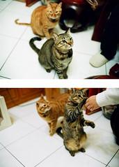 (Johnlin Li) Tags: classic cat 35mm f14 voigtlander 200 konica 365 nokton voigtlnder rf  hexar  uxi enfiniti