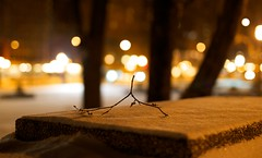Sea of Light (Philocycler) Tags: nightphotography snow chicago bokeh powder twig michiganavenue throne chicagoist seaoflight