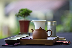Tea Appreciation  (olvwu | ) Tags: cup tea drink taiwan plate can appreciation kettle  bonsai tao brew teaparty chinesetea lugu chadao oolong nantou oolongtea   jungpangwu oliverwu oliverjpwu nantoucounty  thewayoftea olvwu  jungpang chatao lugutownship chineseteaway