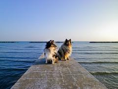 porette! (Hermio-Black) Tags: sky beach dogs cane sunrise pier collie candy lassie thelittledoglaughed