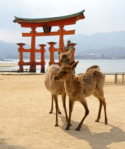 From Miyajima with love