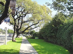 "HS-11 Tree-Lined Street • <a style=""font-size:0.8em;"" href=""https://www.flickr.com/photos/76147332@N05/7042915029/"" target=""_blank"">View on Flickr</a>"