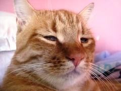 Bris com soninho - Bris - Nosso lindo visitante e estimado gato se foi. Atropelaram e mataram na frente do nosso prdio. :( (E l i a n a R e i n a l d o) Tags: gato gata felino gatinho bris pretinha