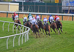 "2012-05-04 (121) r7 into the first turn (JLeeFleenor) Tags: pimlico marylandracing horses racing jockeys horseracing thoroughbredracing marylandhorseracing jockey جُوكِي ""赛马骑师"" jinete ""競馬騎手"" dżokej jocheu คนขี่ม้าแข่ง jóquei žokej kilparatsastaja rennreiter fantino ""경마 기수"" жокей jokey người thoroughbreds equine equestrian cheval cavalo cavallo cavall caballo pferd paard perd hevonen hest hestur cal kon konj beygir capall ceffyl cuddy yarraman faras alogo soos kuda uma pfeerd koin حصان кон 马 häst άλογο סוס घोड़ा 馬 koń лошадь maryland"