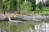 Plesiosaurus & Ichthyosaurus (Tiggrx) Tags: sculpture lake london model marine dinosaur reptile prehistoric crystalpalacepark ichthyosaur plesiosaur benjaminwaterhousehawkins ichthyosaurus plesiosaurus
