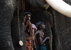 Cornacs Waiting Alongside Their Elephants During Jagannath Temple Festival, Thalassery, India (Eric Lafforgue Photography) Tags: travel carnival portrait people india holiday elephant color colour animal festival horizontal outside outdoors photography waiting day religion decoration culture belief kerala chain ritual spirituality tradition mustache hindu hinduism protection groupofpeople asianelephant southindia tusk traditionalculture endangeredspecies menonly twomen spiritualism colorimage indianculture woodenstick indianpeople thalassery tellicherry waistup traveldestination semidressed cornac sacredanimal foreignculture jagannathtemple mixedagerange