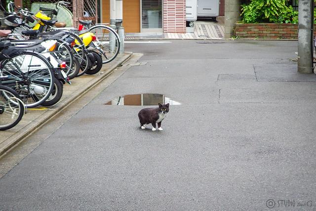 Today's Cat@2014-04-30