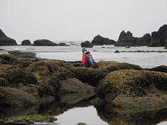 2016-04-27_DSCN5305 (becklectic) Tags: beach oregon pacificocean oregoncoast tidepools amie sealrock 2016
