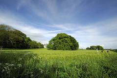 wide angle Dorset 143/366 (dawn.v) Tags: uk england tree green landscape countryside nikon wheat may bluesky dorset wideanglelens 2016 wideangledorset