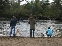 River (Paul McNamara) Tags: ireland riverliffey kildare castletown celbridge