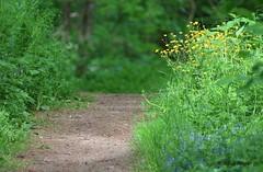 Wanderweg (Klaus R. aus O.) Tags: sommer gras blume wandern boden pfad frhjahr erholung steigerwald naherholung zabelstein