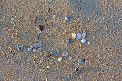 Kill Devil Hills 05-24-16 (BrandonWaterfield) Tags: sea shells beach nc sand outer banks obx