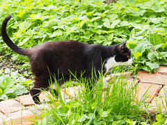 Felix & Dani (arjuna_zbycho) Tags: pet cats pets cute animal animals cat blackcat kitten feline chat felix kitty kittens tuxedo gato tuxedocat gatto katzen haustier kater tier gattini hauskatze kocio