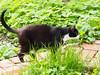 Felix & Dani (arjuna_zbycho) Tags: pet cats pets cute animal animals cat blackcat kitten feline chat felix kitty kittens tuxedo gato tuxedocat gatto katzen haustier kater tier gattini hauskatze kocio
