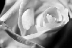 (omarpappi) Tags: bw blancoynegro monochrome photography mono monocromo photo blackwhite nikon noiretblanc natura monocrome photoshow allaperto 123bw nikond300 nikonflickraward