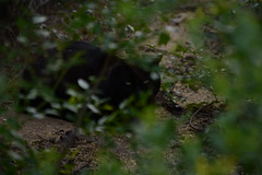 Mo Limpy (b_d_w_s) Tags: nature cat blackcat outside outdoors nikon straycat unedited nikond3100
