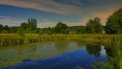 Petit tang-Espace nature (Yasmine Hens) Tags: water eau europa flickr belgium ngc jambes namur tang hens yasmine wallonie iamflickr flickrunitedaward hensyasmine