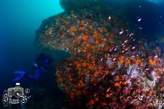Europa Reef (ShaunMYeo) Tags: scubadiving gibraltar calpe underwaterphotography جبل gibilterra ikelite طارق גיברלטר 直布罗陀 гибралтар γιβραλτάρ gibraltár الطارق cebelitarık gjibraltar ĝibraltaro hibraltar xibraltar giobráltar gibraltārs gibraltaras ġibiltà जिब्राल्टर ஜிப்ரால்டர் జిబ్రాల్టర్ ยิบรอลตา جبرالٹر גיבראַלטאַר गिब्राल्टर জিব্রাল্টার 直布羅 陀જીબ્રાલ્ટર ジブラル europareef