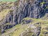 9Q6A1876 (2)-2 (Alinbidford) Tags: waterfall lakedistrict cumbria theband rockclimbers windermere buttermere hillwalking ullswater loweswater wrynosepass greyfriar ariaforce redpike thirlmere sidepike bowfell greywagtail lowfell langdalepikes dungeonghyll swirlhow hallinfell arthurspike mellbreak churchbridge scaleforce fellbarrow hencomb greatcarrs littlemellfell wetherhill wetsideedge wrynosebottom alancurtis lingmoortarn sourfootfell loadpothill greatborne steelbrow holmeswood littledodd starlingdodd steelknotts littlecarrs alinbidford smithyfell hattergillhead loftbarrow flourterntarn brownhowes
