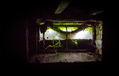 Growth (Andrew Gibson.) Tags: plant heritage abandoned broken window architecture wasted bug dark ruins factory decay background empty web grunge ruin grow landmark dirty dirt aged growing waste forsaken decrepit damaged desolate derelict deserted ramshackle grungy ruined decrepid urbex shabby desolated frozenintime nantwich dererted dreamcottages sonya7ii ilce7m2