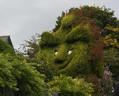 A smiling tree!! (Kath Williams(Thanks for the Faves)) Tags: trees smiling faces