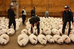 IMG_5849 (tsaaby) Tags: japan fishmarket fisk fiskemarked tmfstudietur