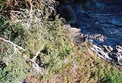 Machu Picchu 1 - 32