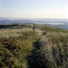 Mountain path. (wojszyca) Tags: morning mountains 6x6 tlr nature grass sunrise mediumformat landscape dawn fuji path hike mat 124g pro epson yashica bieszczady 4990 160s