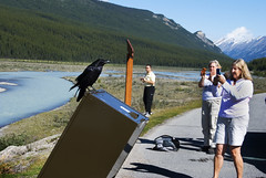 "PhotoFly Travel Club: Canadian Rockies 2011 • <a style=""font-size:0.8em;"" href=""http://www.flickr.com/photos/56154910@N05/6802988934/"" target=""_blank"">View on Flickr</a>"