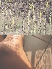 le cose abbandonate sono di chi le trova (me.joshi.pxl) Tags: light colour diptych soft estate legs ombra siena fiori viaggio luce joshi gambe girasoli 2011 devosmetteredcomprarelibriperchmipiaceunafraselettaingiro